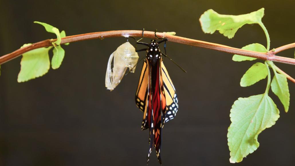 Det er umuligt at transformere en virksomhed, uden også at transformere de mennesker der er i den!